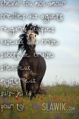 photo de chevaux - la chronicturf pmu turf repport spl trio